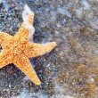 Starfish on sea coast - Stock Photo