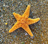 Starfish on sea coast — Stock Photo