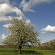 Apple tree in Georgsmarienhuette, Lower Saxony, Germany, Europe - Lizenzfreies Foto