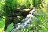 Romantic creek surrounded by exotic plants — Stock Photo