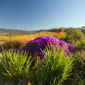Landscape with beautiful flowers and plants — Stock Photo