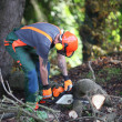 A forest worker in wood saws — Stock Photo