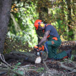 Stock Photo: Forest worker makes wood