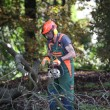 Forest workers at work — Stock Photo #7273626