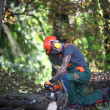 Stock Photo: Forestry worker sawing tree trunk.