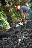 Lumberjack saws road — Stock Photo