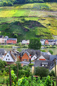 Vineyards along the Mosel — Stock Photo