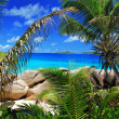 Marvellous beach with palm trees — Stok Fotoğraf #7844088