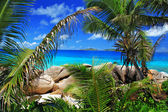 Marvellous beach with palm trees — Stock Photo