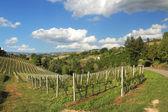 Heuvels en wijngaarden van piemonte. noord itaky. — Stockfoto