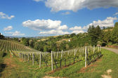 Hills and vineyards of Piedmont. Northern Itaky. — Foto Stock