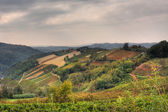 Hills and vineyards at fall. Piedmont, Northern Italy. — Stock Photo