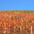 Multicolored vineyard hill. Piedmont, Northern Italy. — Stock Photo