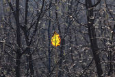 Yellow leaf. — Stock Photo