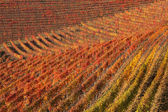Vineyards at fall. Piedmont, Northern Italy. — Stock Photo