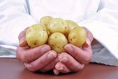 Female chef holding a couple of young potatoes in her hand — Stock Photo