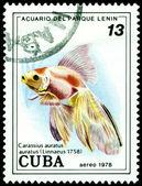 Vintage postage stamp. Fish Carassius auratus. — Stock Photo