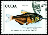 Vintage postage stamp. Fish Hiphessobrycon Flammeus. — Stock Photo