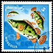 Vintage  postage stamp. Fish siniperca chuatsi. — Stock Photo