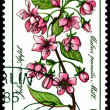 Stock Photo: Stamp. Flowerses of Malus pumilMill.