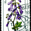 Stamp. The Flowerses of the Paulownia tomentosa - Stock Photo