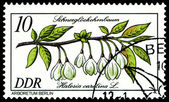 Stamp. The Flowerses of the Halesia Carolina. — Stock Photo