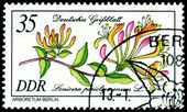 Stamp. The Flowerses of the Lonicera periclyme — Stock Photo