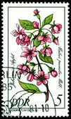Stamp. The Flowerses of the Malus pumila Mill. — Stock Photo