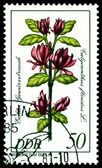 Stamp. The Flowerses of the Calycanthus floridu — Stock Photo