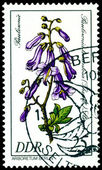 Stamp. The Flowerses of the Paulownia tomentosa — Stock Photo