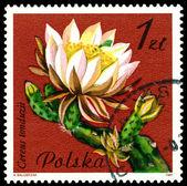 Vintage postage stamp. Flower Cereus Tonduzii. — Stock Photo