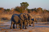 Elephants at Sunset — Stockfoto