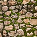 Stone & Moss textured wall — Stock Photo