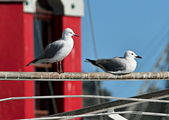 Seagulls overlooking Table Bay Harbour. — Stock Photo