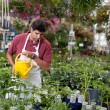 Man watering plants - Stock Photo