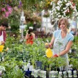Workers at greenhouse — Stock Photo