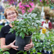 Smiling senior woman holding potted plant — Stock Photo