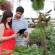 Couple with Digital Tablet in Greenhouse — Stock Photo