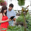 Couple with Digital Tablet in Greenhouse — Stockfoto