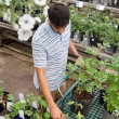 Man shopping for potted plants — Stock Photo #6908487