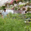 Man walking through the greenhouse — Stock Photo