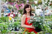 Beautiful female customer holding potted plant — Stock Photo