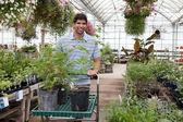 Mann mit topfpflanzen auf wagen — Stockfoto