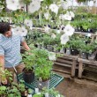 Stock Photo: Man Shopping for Plants in Garden Center