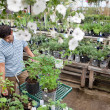 Man Shopping for Plants in Garden Center - Stock Photo