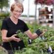 Woman at plant nursery - Foto de Stock