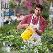 Young Man Watering Plants — Stock Photo