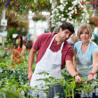 Stock Photo: Florists at greenhouse