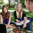 Royalty-Free Stock Photo: Students Studying Outdoors
