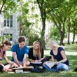 Foto Stock: College students studying together